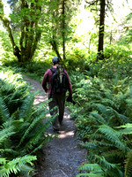 Dan on Hall of Mosses Trail, Hoh Rainforest, Olympic National Park, WA (2019)